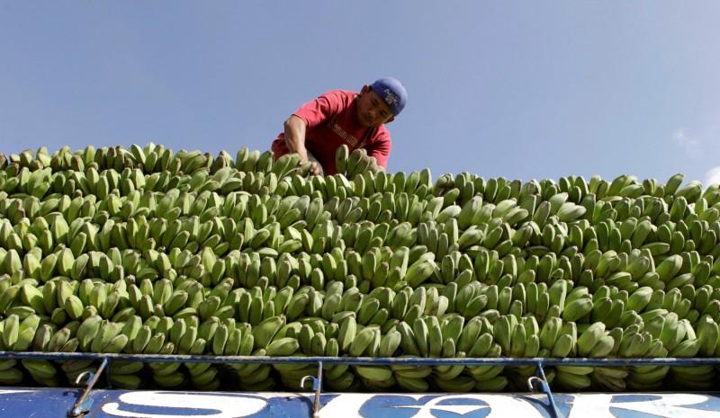 超車日本!中國成菲律賓最大香蕉出口地