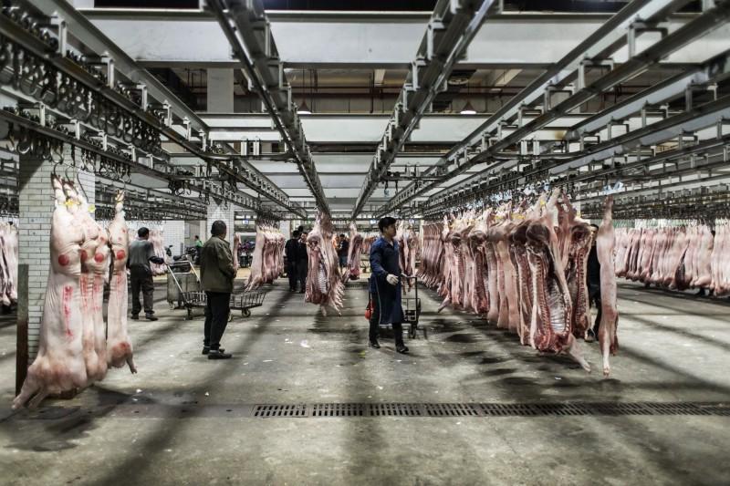 中國進口美全豬量增百倍 美農業部令肉商揭露豬肉銷售