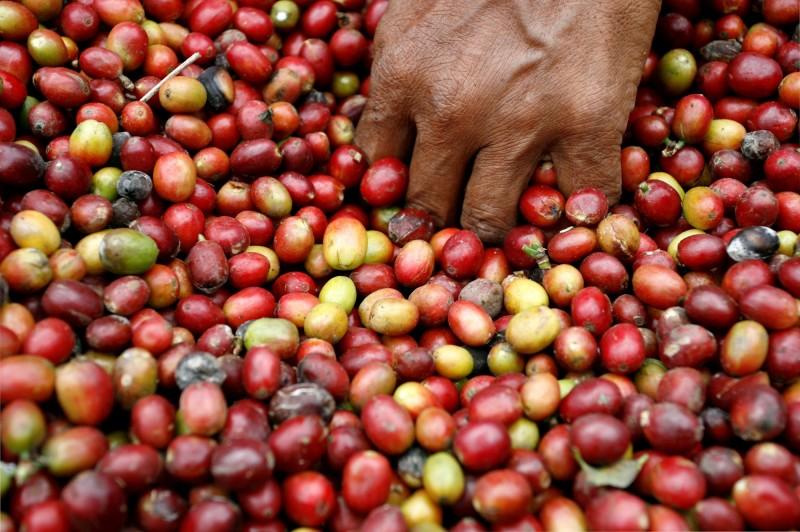 咖啡準備漲!印尼產量明年恐降到近10年最低