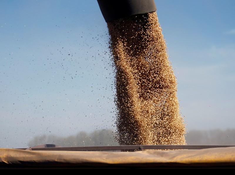 加速達成協議?中國排除部分美進口黃豆、豬肉關稅