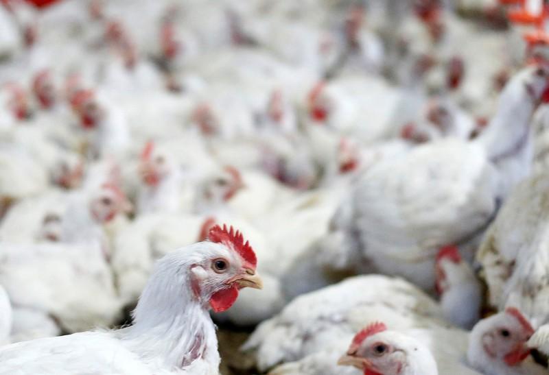 中國3大疫情危及肉類供給 巴西商樂見需求上升