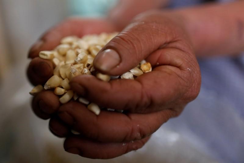 肚子重要!委內瑞拉拿數百萬桶石油交換玉米、水