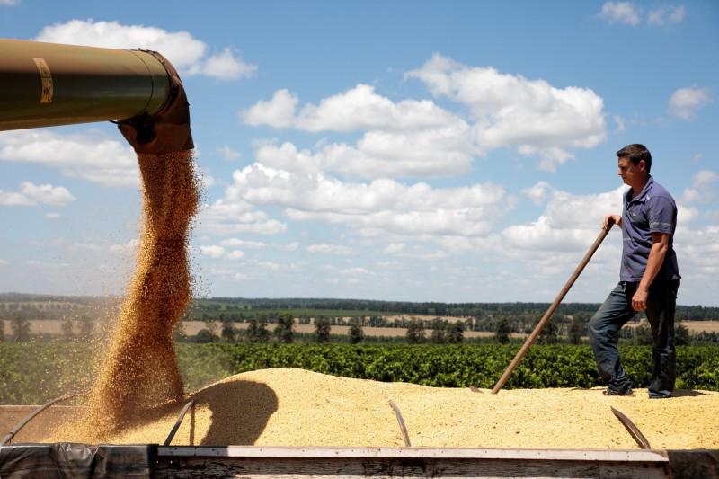 傳中國正放棄購買昂貴的巴西大豆 轉向美國供應