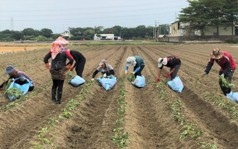 將軍農會農技團招農業師傅 月薪4萬以上