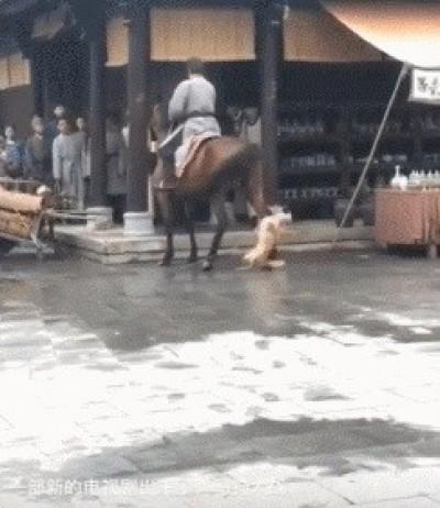 中國電視劇爆虐狗!小狗被綁遭馬狠踹 殘忍畫面曝光