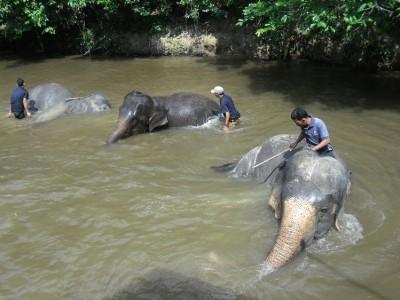 幫大象洗澡、親近萌小鹿  感受馬來西亞動物系療癒!