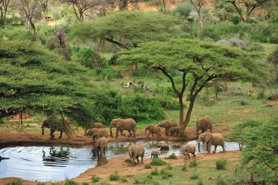 探訪非洲見證動物奇景 熱門獵遊地點看這裡!