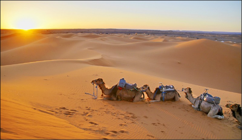 摩洛哥 撒哈拉沙漠尋奇