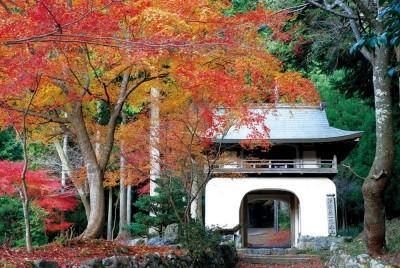 京都郊區隱藏版賞楓景點  品味不一樣的楓景魅力