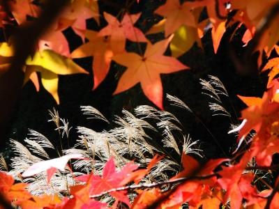 秋季神戶賞楓 這些美景地點別錯過