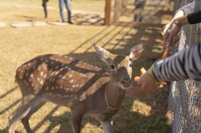 飼養員化身奶爸 埔心牧場辦梅花鹿歡迎派對