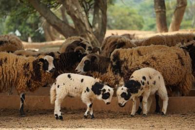 動物媽媽也要歡度佳節  六福村媽媽購票享520優惠