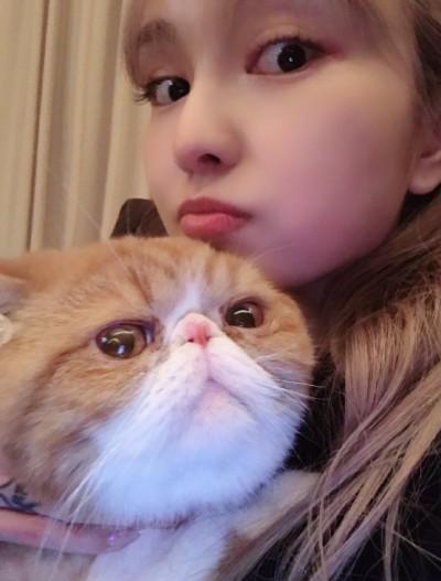 周揚青揭醜小豬粉絲飆破千萬 貓咪噴血急求助