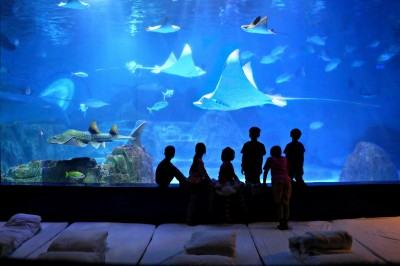 遠雄海洋公園親親夜未眠  水族生物零距離互動夜宿體驗
