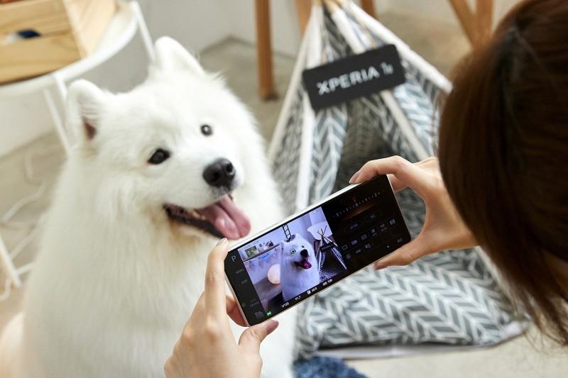 毛寶貝「萌到殺光手機儲存空間」 寵物攝影達人4招教戰