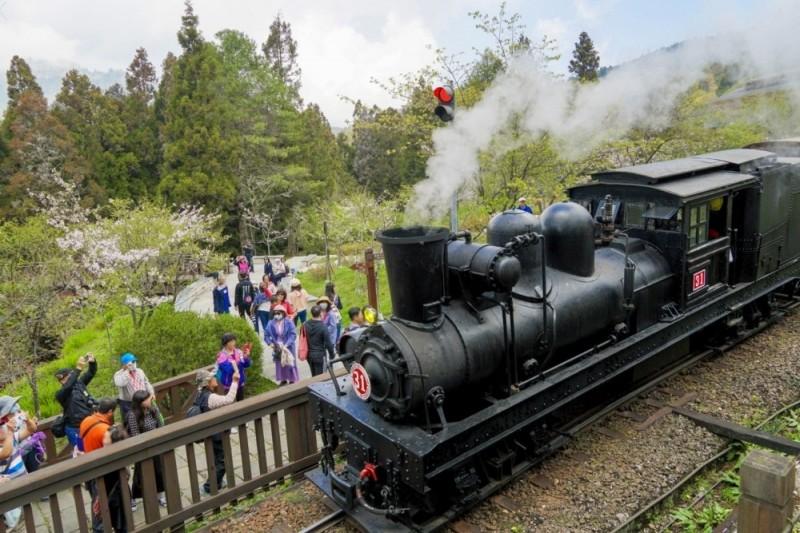 搭火車遊阿里山 感受獨特賞櫻盛會