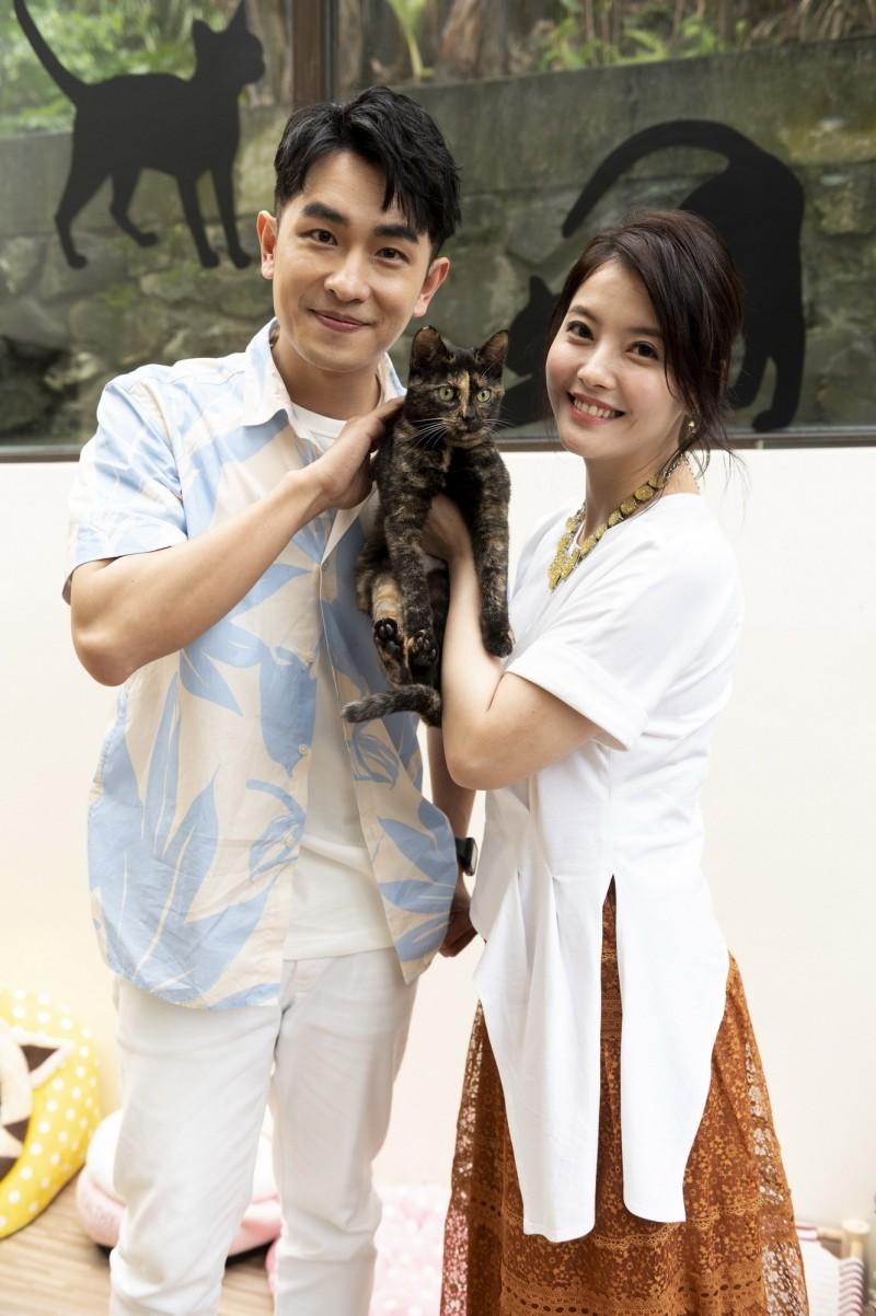 王樂妍寵毛小孩砸30萬裝修新房 打造夢幻「貓城堡」