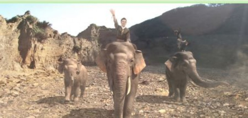 楊麗花復出新戲騎大象   陳亞蘭親自解密