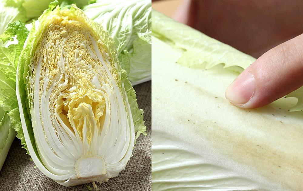 冬天產季到!大白菜這樣挑選:重點在葉片密度!