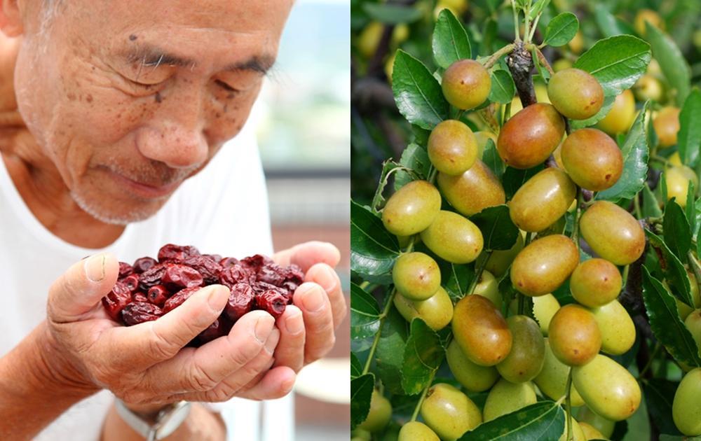 苗栗公館紅棗鮮果產季到 8 月!挑買紅棗乾「天然日曬、機器烘乾」有學問