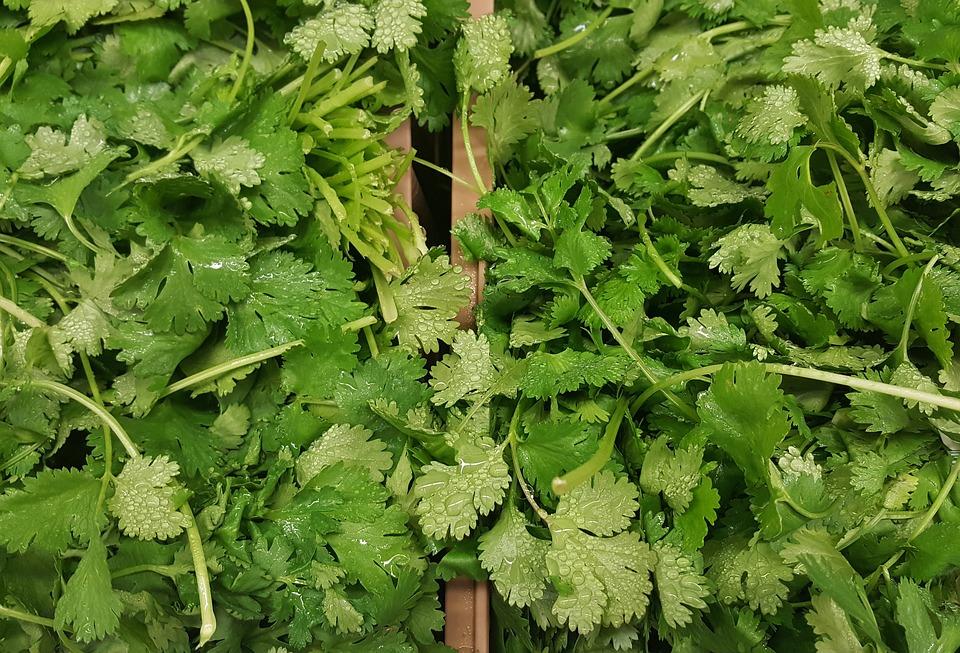 香菜暗藏農藥危機?芫荽「清洗&保存」這樣做更安心