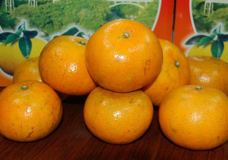 種類 柑橘類