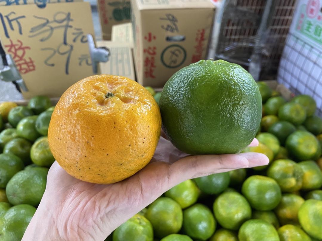 闢謠!橘子別再挑「母的」 水果店老闆:要買越綠的越甜