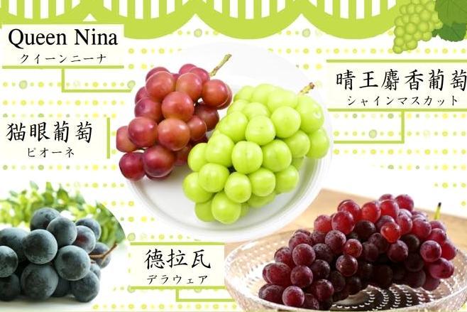 「晴王麝香葡萄」貴在哪?1 張圖秒懂日本 5 大人氣葡萄