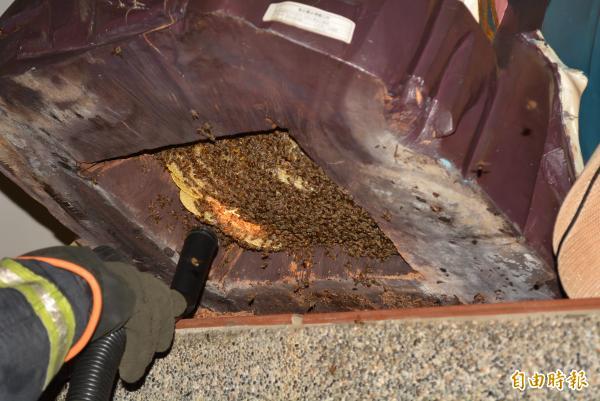 消防員為鄭成功神尊摘蜂巢,以吸塵器將蜜蜂吸出後,再將蜂巢拔下。(記者湯世名攝)