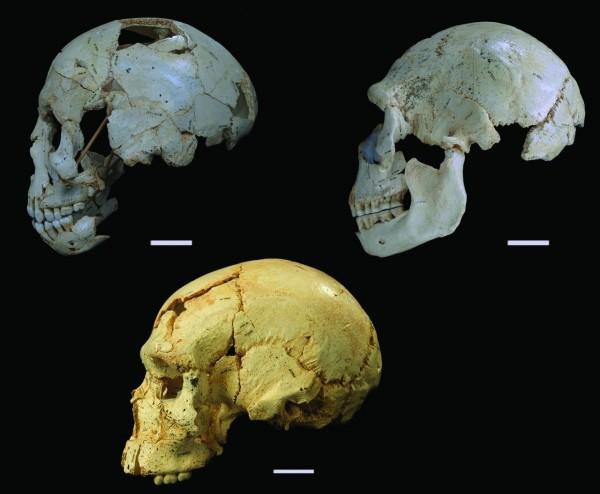 西班牙胡瑟裂谷的尼安德塔人頭顱。(沈川洲教授提供, Javier Trueba 攝影)