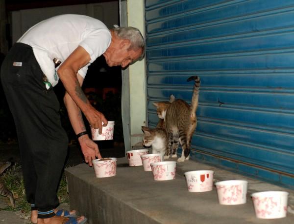 英國人「馬爺爺」來台30年, 花光積蓄照顧百隻流浪貓。(台灣動物緊急救援小組提供)