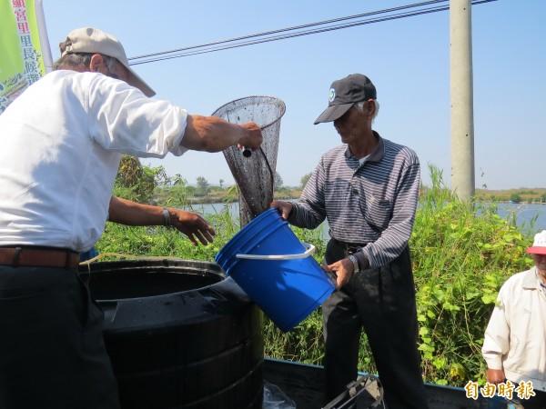 漁民購買近10萬元,約2萬尾虱目魚苗在停養魚塭復養。(記者蔡文居攝)