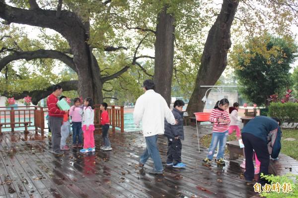 新竹縣文山國小在圖中3棵200歲老楓香樹下打造的楓香舞台,是該校師生親近老樹的親善空間。(記者黃美珠攝)