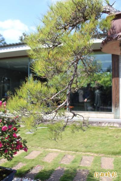 從戶外的盆景藝術望向水墨畫展場,結合地景,也另有趣味。(記者黃美珠攝)