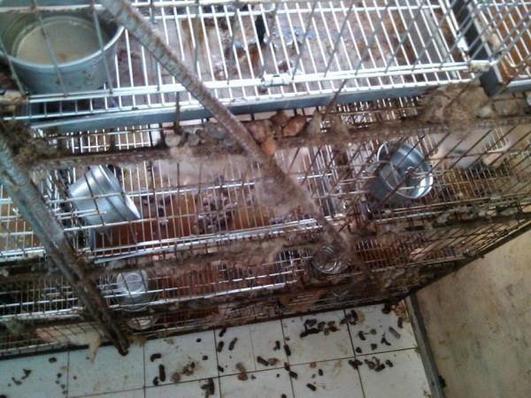 照生會貼出照片,指稱新北市八里的犬隻養殖場環境惡劣。(圖擷取自臉書)