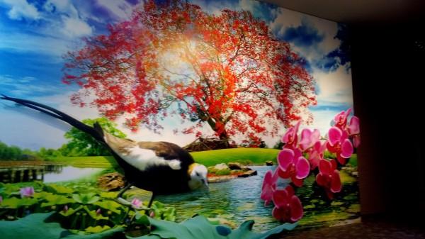 台南市市樹鳳凰樹、市花蝴蝶蘭及市鳥水雉。(記者蔡文居翻攝)