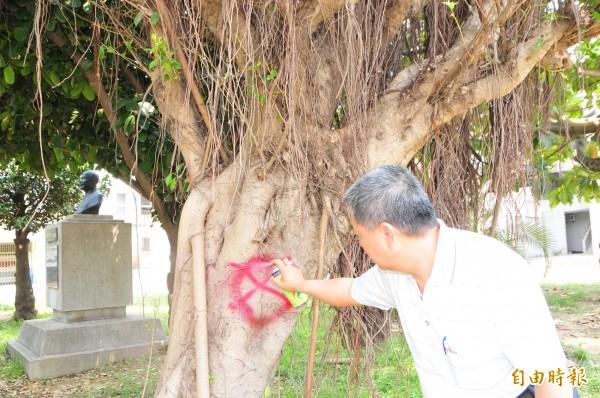 花崗國中校內老榕樹,將移植到附近的公園,學校主任在原本的X之外再噴上紅色圈圈,意思是「不砍了」。(記者花孟璟攝)