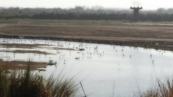 高屏溪床川流量下降,溪床枯竭偶可見底,大風吹起黃沙漫飛。(圖片由林立輝提供)