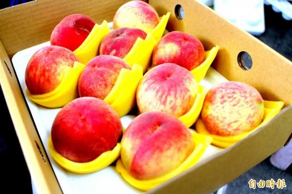 媽媽桃的體型較一般拉拉山區產出的桃子還小,但水分、甜度卻不亞於拉拉山的水蜜桃。(記者郭逸攝)