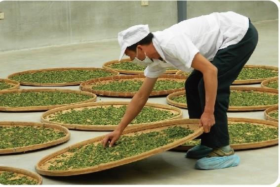 技能檢定中心今年首開辦「製茶技術」職類丙級技能檢定。(圖由技能檢定中心提供)
