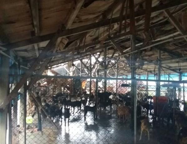 Fw: [新聞] 颱風重創78處收容場 逾1萬5千貓狗斷糧