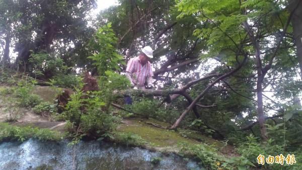 工作人員清除斷樹。(記者林欣漢攝)