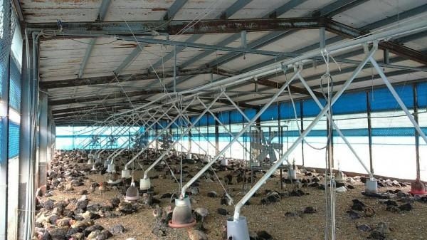 董孟治指出,同一個土雞場在一年內發生兩次禽流感,連病毒都同一型,這可能是場內有殘存的禽流感病毒。(圖由彰化縣動物防疫所提供)