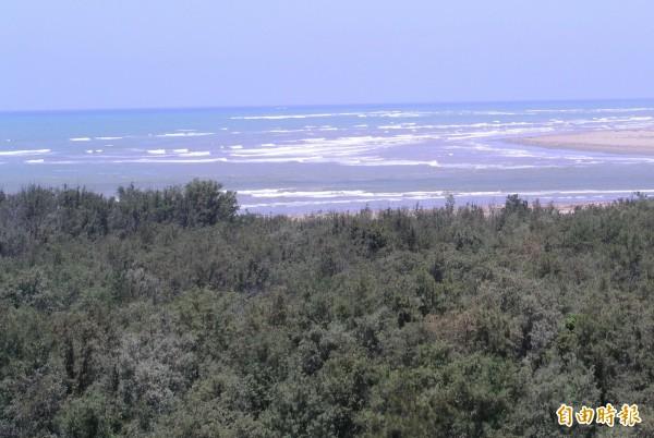 南市計畫在台江國家公園內蓋掩埋場,將砍掉7公頃防風林,環團質疑與低碳城市相違背,要求重新檢討。(記者蔡文居攝)