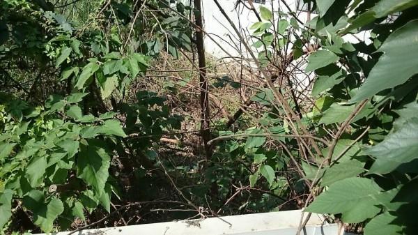 台鐵樹林站附近今天上午發生電車線故障。經台鐵電務同仁現場搶修及巡查結果,發現事故原因是後方居民砍樹只砍一半,剩下的枯樹枝幹被風吹倒,碰觸懸臂礙子、產生大電流、在主吊線夾內熔斷。(台鐵提供)