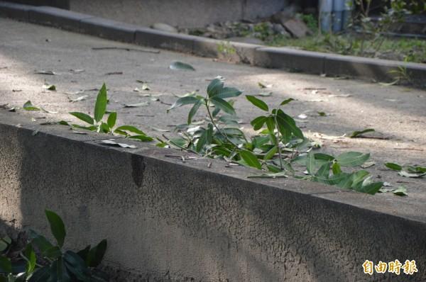 林姓學生撞斷樹木後,又撞擊護欄留下血跡。(記者張瑞楨攝)