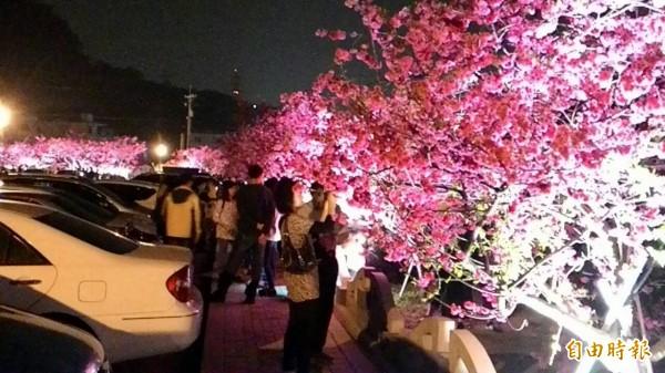 近日天候和暖,泰安賞夜櫻遊客勝於往年。(記者張軒哲攝)