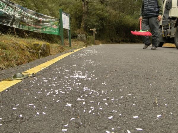 近來在玉山塔塔加園區時常可見一地碎紙花,原來是民眾圖方便撒下的「路引」,但此舉不僅影響觀瞻與環境,也增加清理的困難。(玉管處提供)