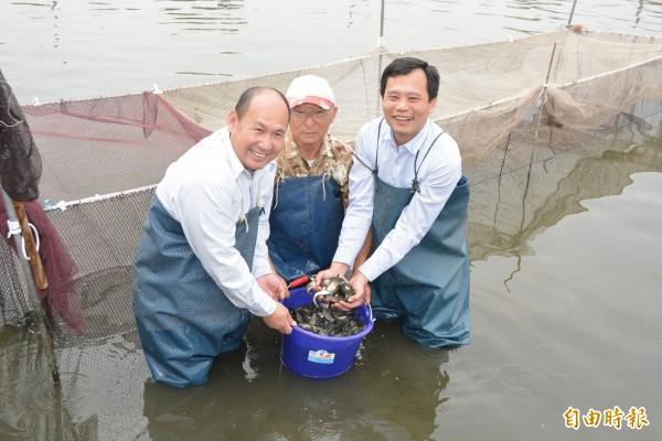 花壇鄉漁民吳東蓮(中)、鄉長李成濟(右)等人到養殖池捕撈魚苗。(記者湯世名攝)