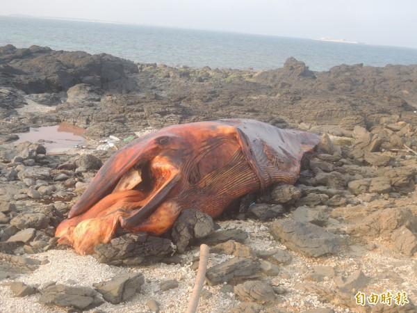 白沙金嶼無人島,傳出鯨魚擱淺死亡。(記者劉禹慶攝)